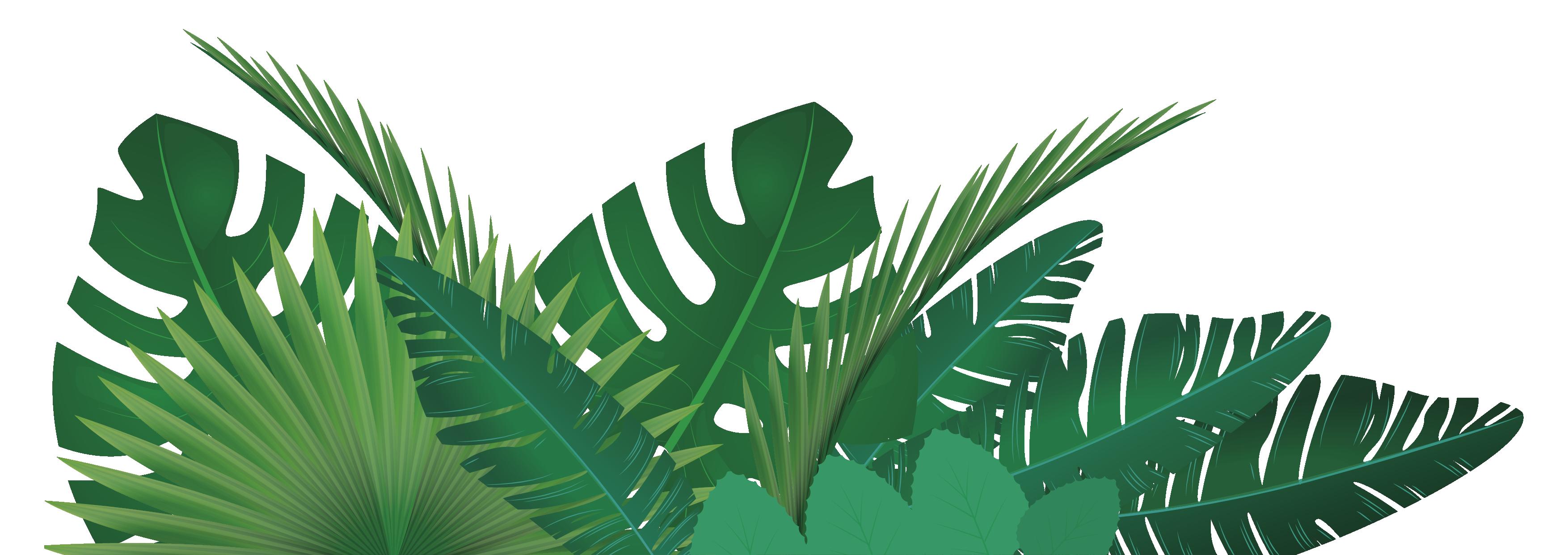 visuel-plantes-01