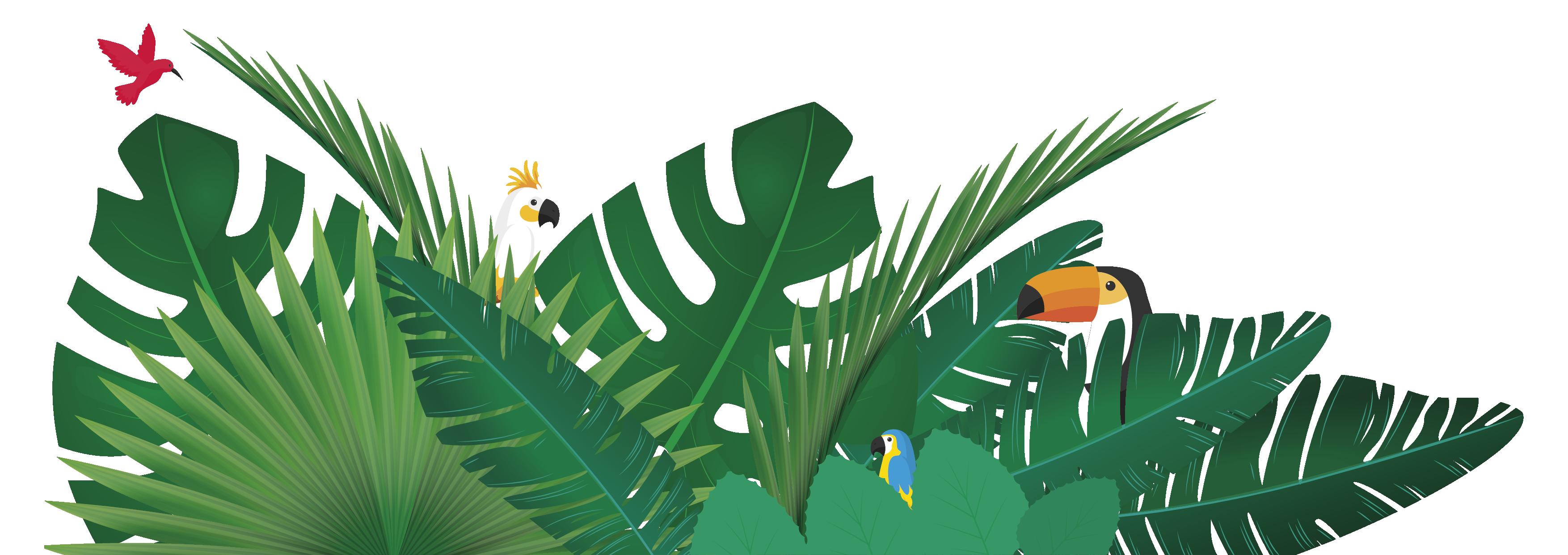 visuel-plantes-oiseaux-01